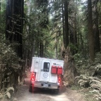 Redwoods and Wine Trails – California